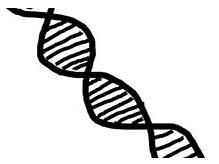 联合国会议同意限制基因驱动